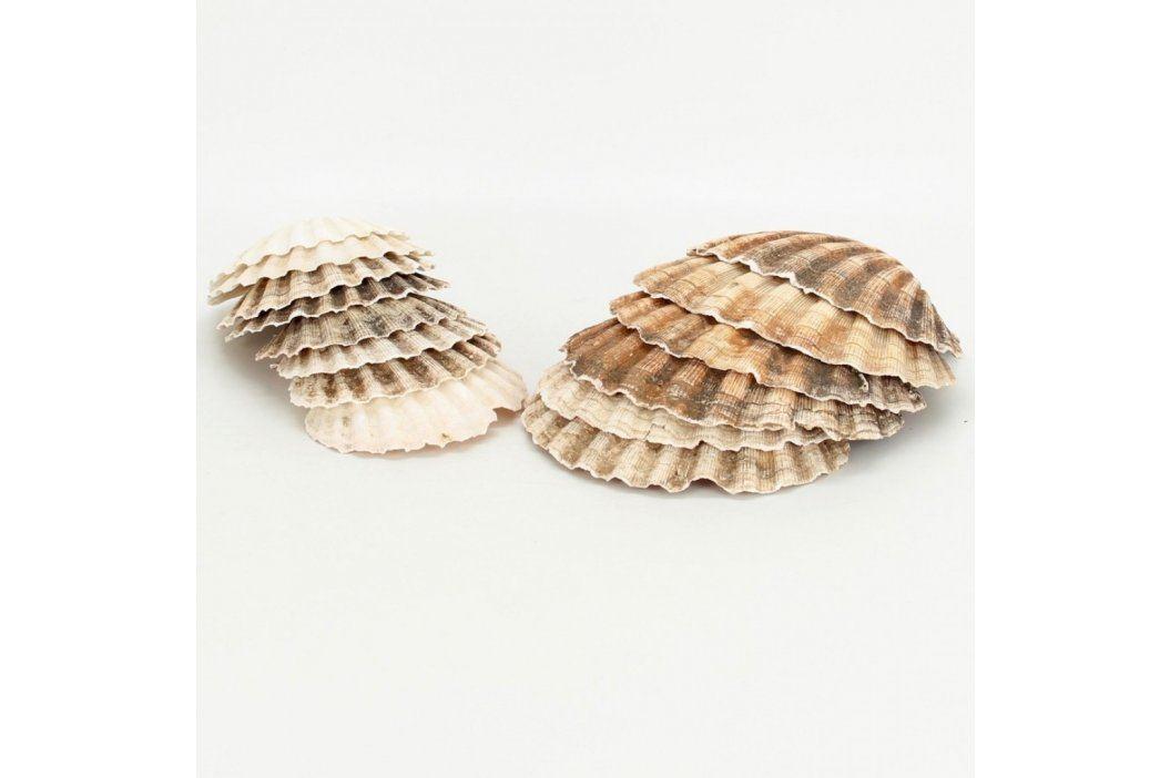 Sbírka lastur mořských mlžů Ostatní sběratelství