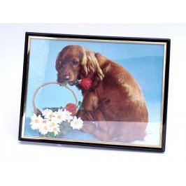Fotografie psa v rámečku na pověšení