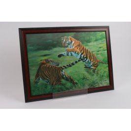 Obraz fotografie tygři