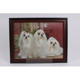 Obraz - grafika - bílí psi