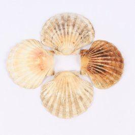 Dekorace 4 mořské mušle