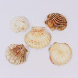 Dekorace 5 ks mořských mušlí