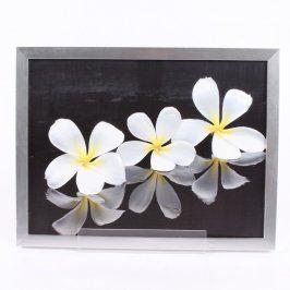 Obraz bílých květin v rámu