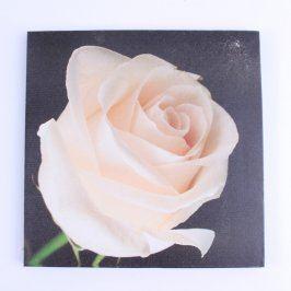 Obraz bez rámu motiv růže