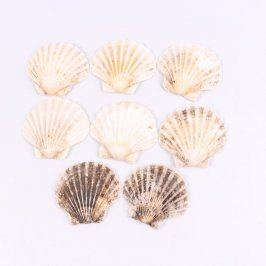 Mořské mušle barevné 8 kusů