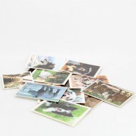 Sada pohlednic psů a nosorožců