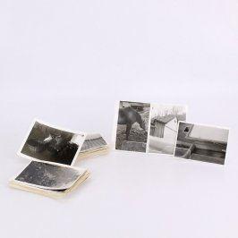 Sbírka černobílých fotografií zvířat a budov