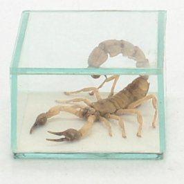 Škorpion v skleněném kvádru